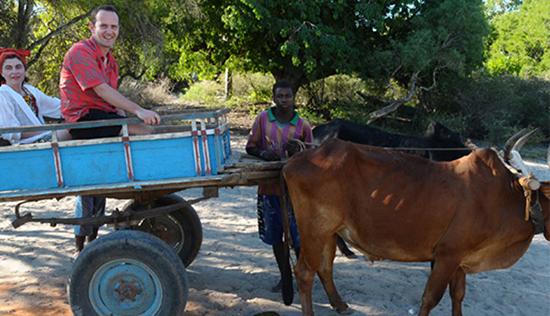 Cart trips in Zébu